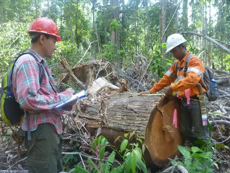 Baseline assessments for forest carbon emissions...